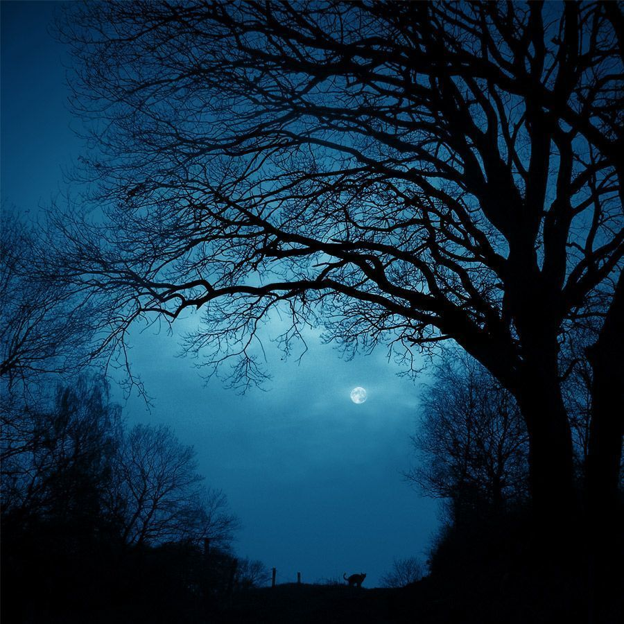 trees night moon blotch - photo #6